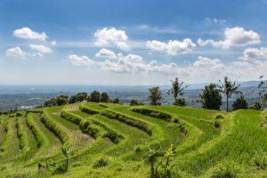 Рисовые террасы на севере Бали
